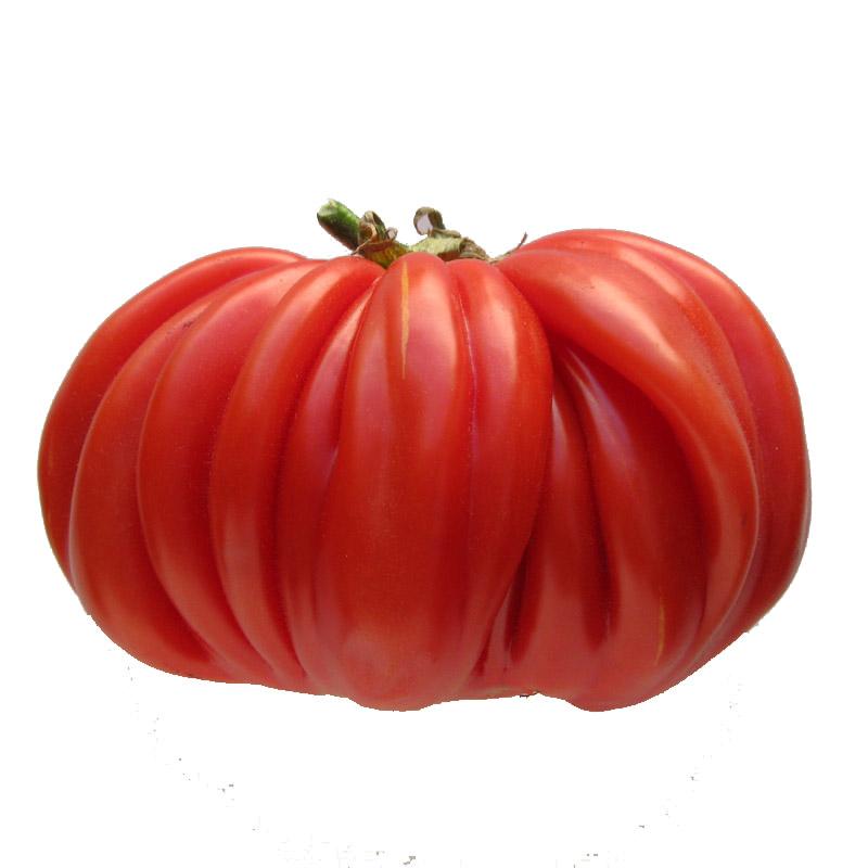 Recette de la tarte la tomate moutarde - Planter des tomates coeur de boeuf ...