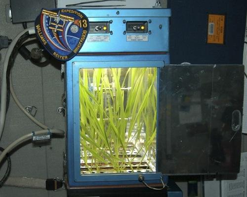 ¨Plant d'orge en observation et culture a bord d'ISS