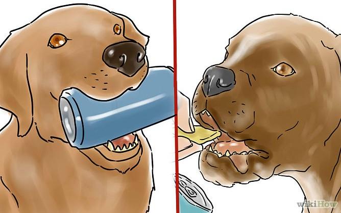 Comment apprendre à son chien « Apporte-moi une bière »
