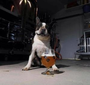Podcast bière avec Gilles Bourdillas et Katxi, le célèbre chien