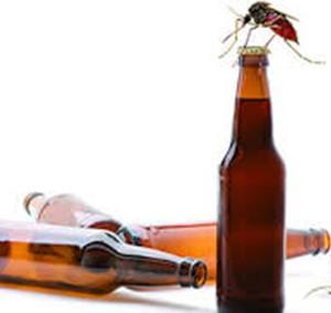 La consommation de bière attire les moustique