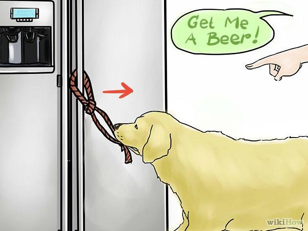 chien-apporter-biere