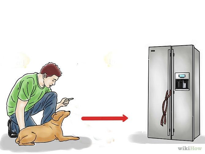 chien-frigo-biere