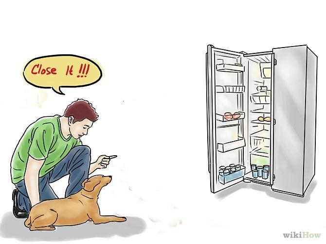 fermer-le-frigo-chien