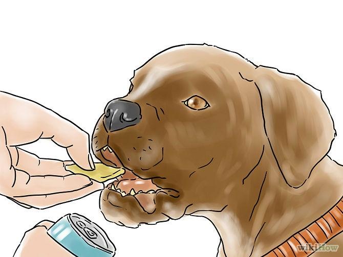 recompense-chien