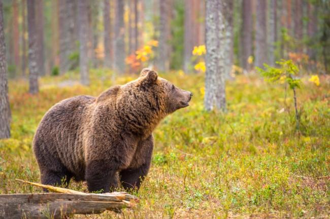Un ours vole des bières dans une maison en Floride