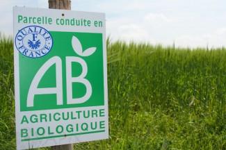 Champ d'orge en agriculture biologique - Organic Farming - Barley field