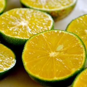 Bières acides: acidification de la maïsche / du moût (sour mash, sour wort)