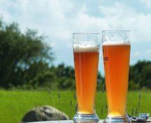 Qu'est-ce qu'une bière blanche ? Tout savoir !