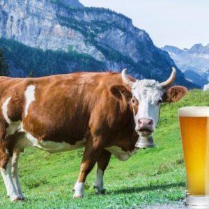 Pourquoi ajouter du lactose dans la bière ?